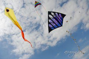 SFFG-kites11-43.jpg
